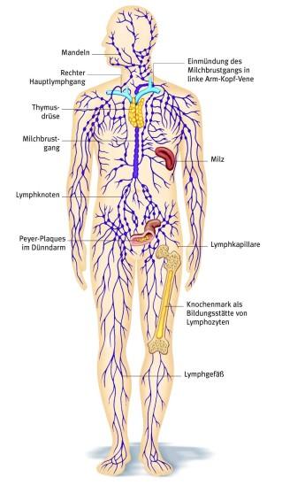 Beinschwelllungen Ursachen